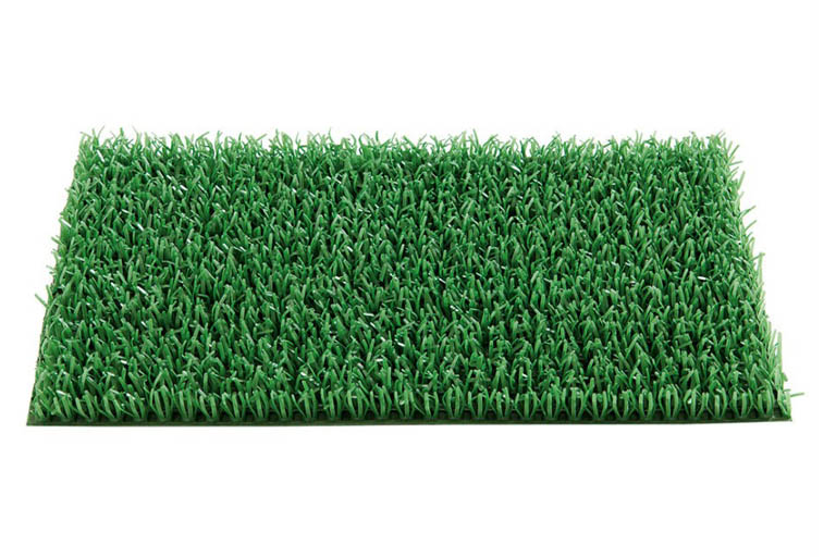Astroturf for Bearded dragons