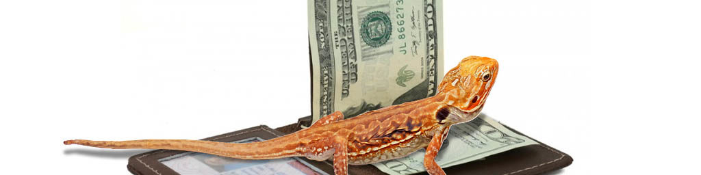 Factors determining the price of a Bearded dragon