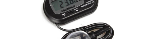 Bearded dragon thermometers