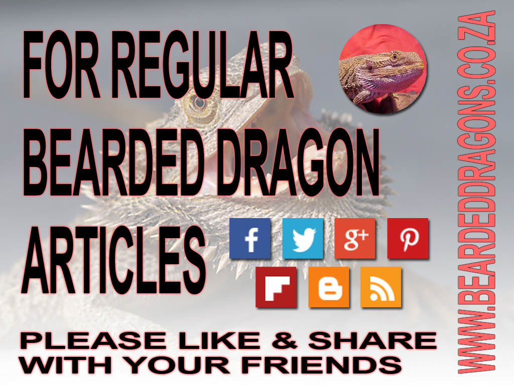 Share Bearded dragon Care Info with your friends