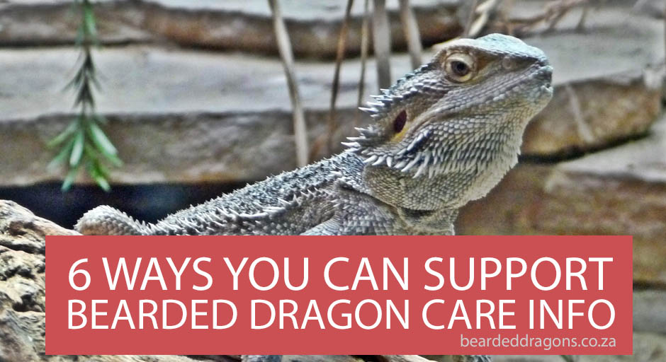 Ways you can support Bearded Dragon Care Info
